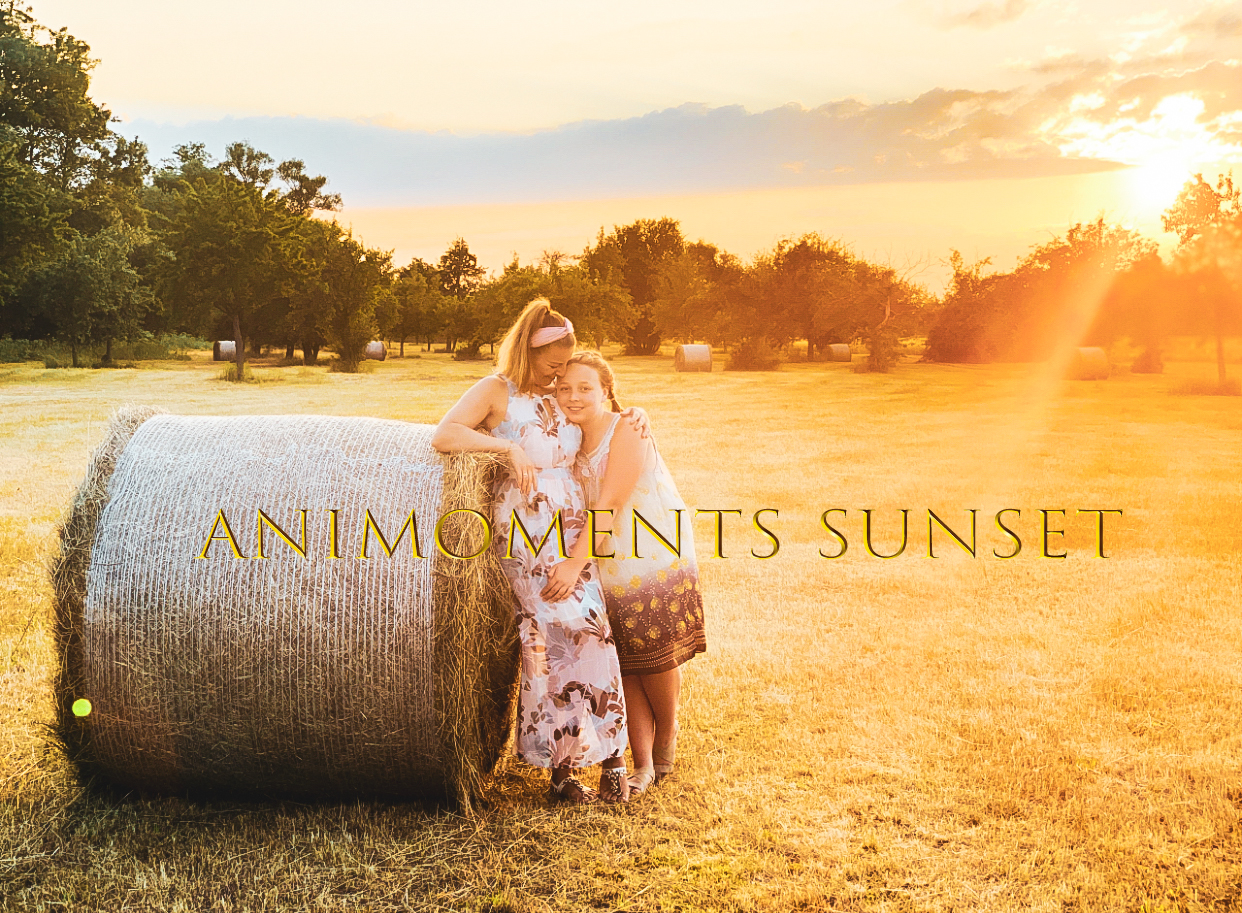 Animoments Sunset